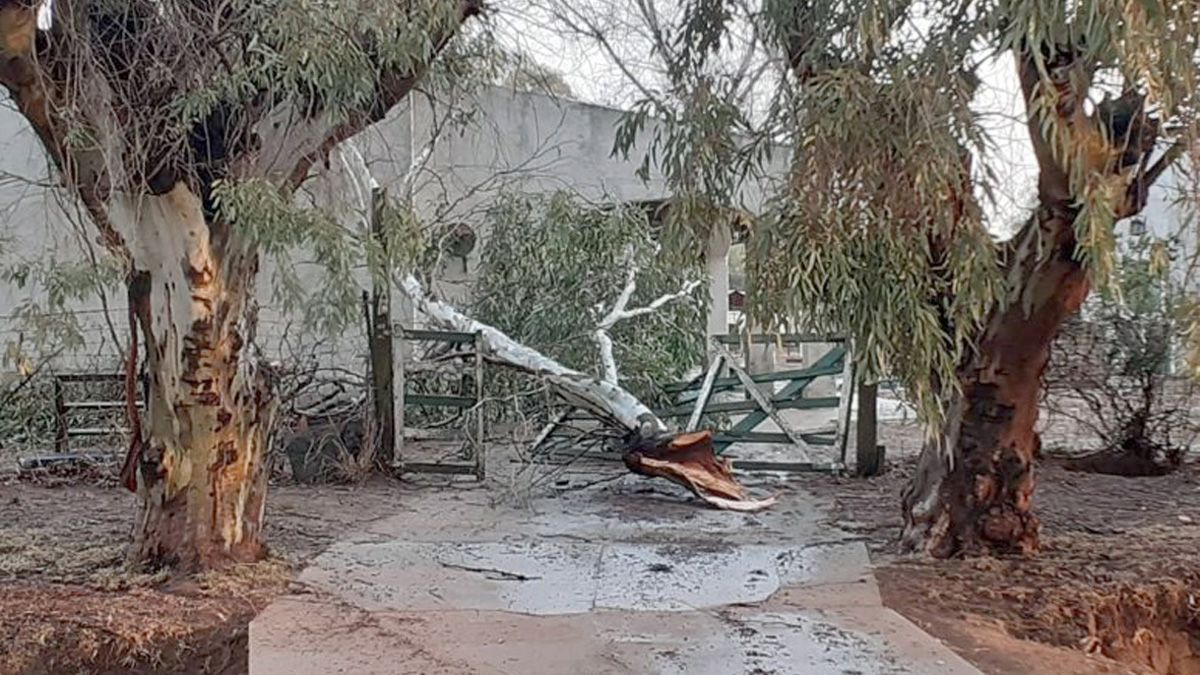 Grandes ramas de eucaliptus cayeron sobre el techo de una vivienda.